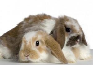 rabbit-bonding