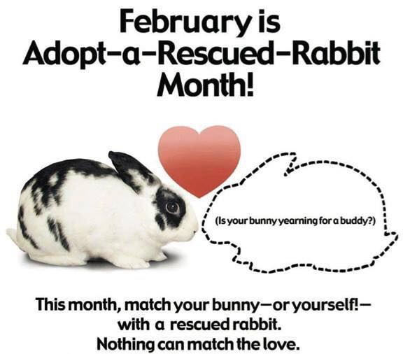 Adopt A Rabbit Month