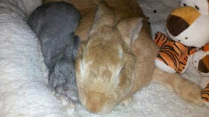 Holly-and-Tigger-Sleeping
