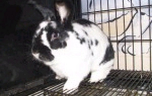 Hoppy Gilmore – In Memoriam