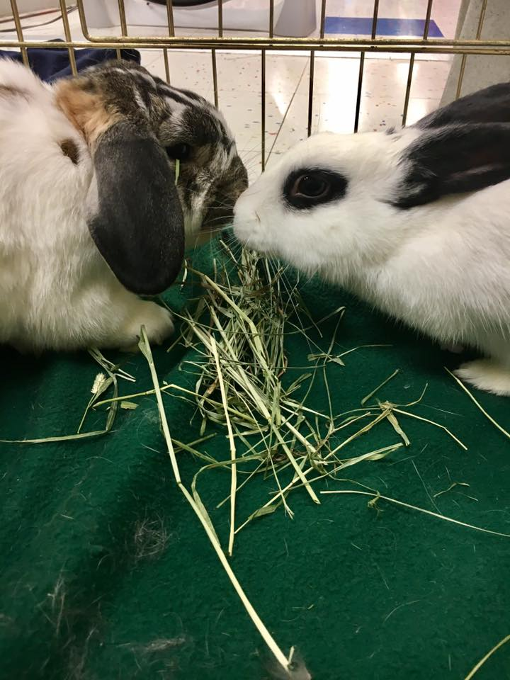 peter and bonnie eating