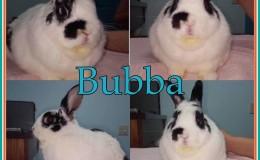 Bubba aa