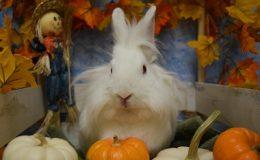 storm pumpkin f