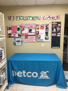 petco rabbit room c