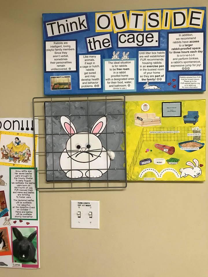 Petco Rabbit Room