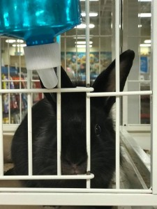 petco rabbit room g