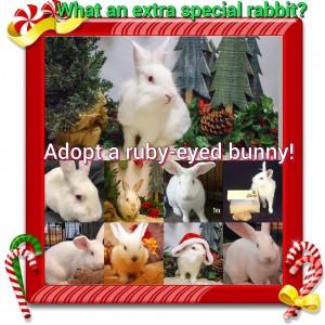 rew adoption special
