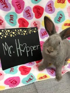 mr hopper a