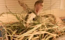 hay bag bailey eating hay