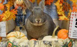 ziggy pumpkin