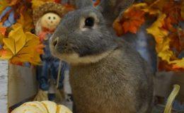 ziggy pumpkin a