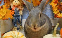 ziggy talking pumpkin