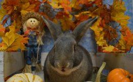 ziggy talking pumpkin a