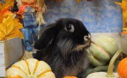 robb pumpkin