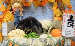 robb pumpkin a