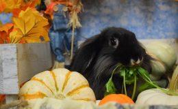 robb pumpkin b