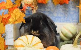 robb pumpkin c