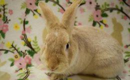 carson bunny a web