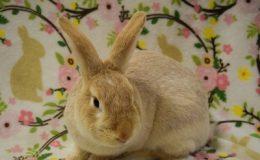 carson bunny b web