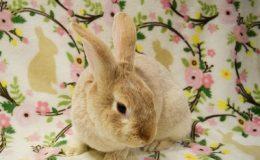 carson bunny cute home page web