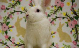 diamond bunny home page web