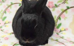 moby bunny c web