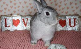 sugarpuff heart d