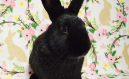 brambleberry bunny home page web