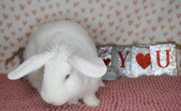 maggie heart b