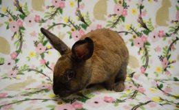 annabelle bunny a web