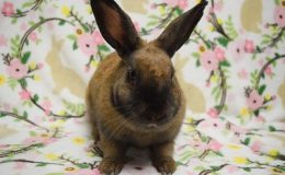 annabelle bunny home page web