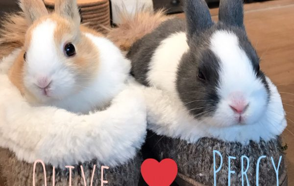 Percy & Olive