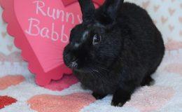runny babbit 1