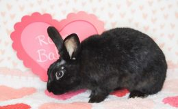 runny babbit 2