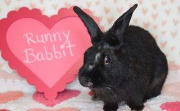 runny babbit 3