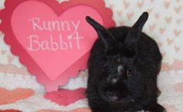 runny babbit 4