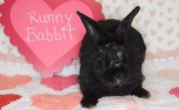 runny babbit 5