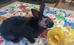 runny babbit a