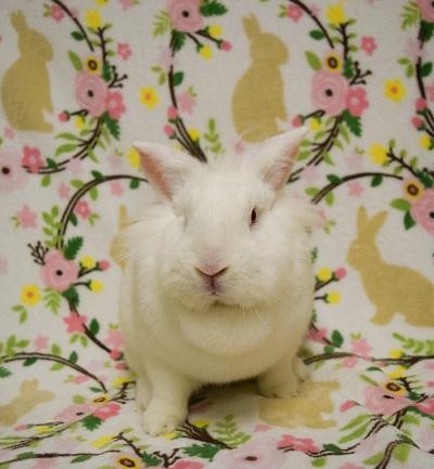 bean bunny b web