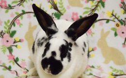 dizzy bunny home page web