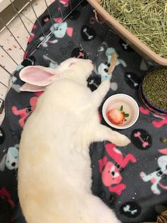 julia napping
