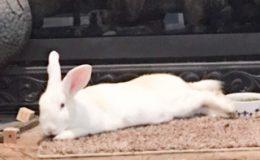 julia relaxing