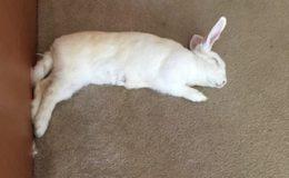 julia sleeping