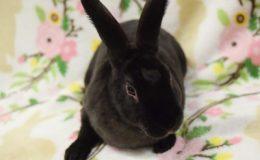 leia bunny b web