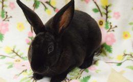 rey bunny a web