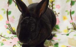 rey bunny web