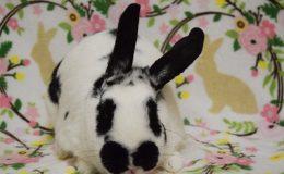 tara bunny b web