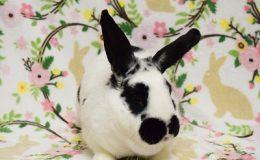 tara bunny c web