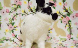tara bunny d web