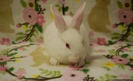 cotton male 6 wks home page web